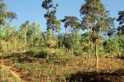 Exemple de déforestation illégale. © FAO