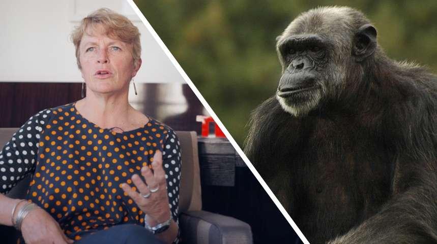 Interview : pourquoi les primates sont-ils si particuliers ?