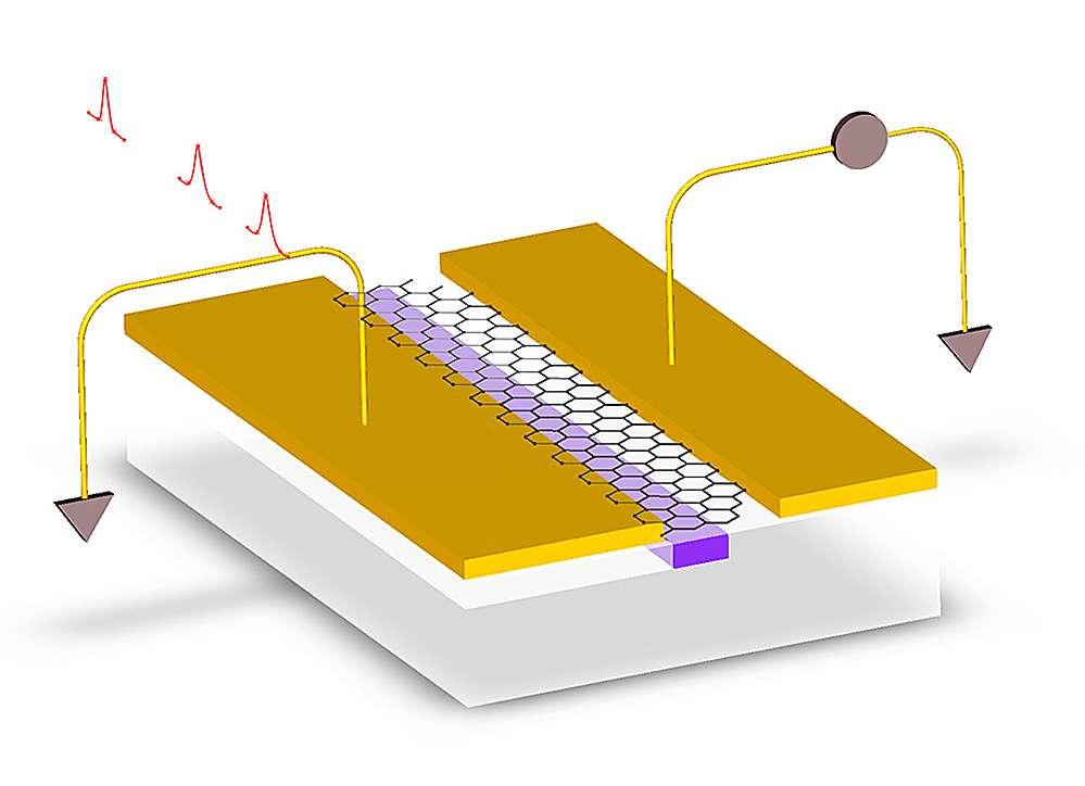 Pour augmenter le rendement des photodétecteurs utilisant un feuillet de graphène, des chercheurs ont étudié ce dispositif. La lumière (les pics rouges) arrive sur le détecteur à travers un guide d'onde en silicium gravé à la surface d'une puce. Une couche de graphène (avec sa structure en nid d'abeilles caractéristique) est déposée sur le guide d'onde. De chaque côté se trouve une électrode en or. Mais le placement des électrodes est asymétrique : cette stratégie devrait permettre le développement de puces pour des ordinateurs fonctionnant selon les principes de l'optronique. © MIT, Columbia University, IBM's Thomas J. Watson Research Center