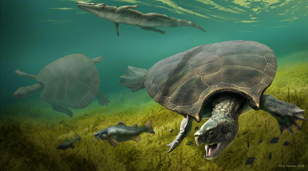 Stupendemys geographicus est la plus grosse tortue ayant jamais existé sur Terre. © JA Chirinos 2019