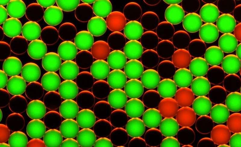 Des gouttes rouges contiennent de l'ADN sain, les gouttes vertes de l'ADN tumoral. © Jean-Christophe Baret, MPI-ds
