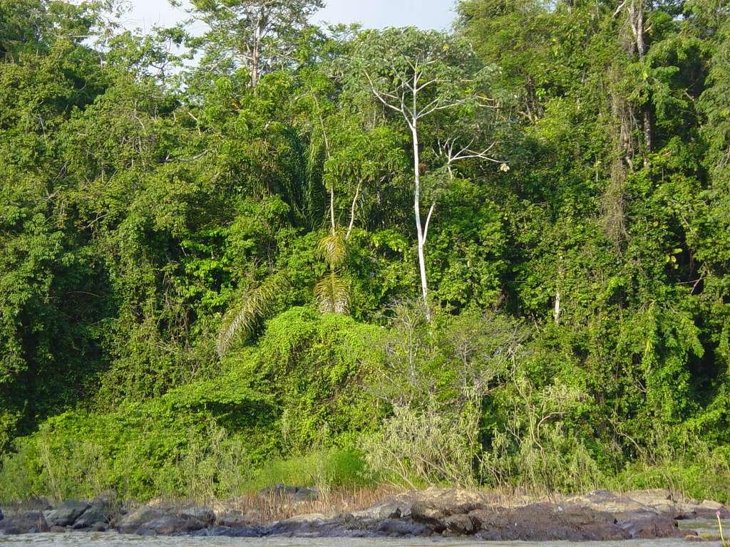 Dans l'est du bassin amazonien, 48 % des précipitations proviendraient de l'évapotranspiration (chiffre de 1977). Tout changement pourrait donc avoir de graves conséquences. © Savo 2003, CC by-nc-sa 2.0