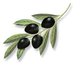 Les déchets d'olive recyclés