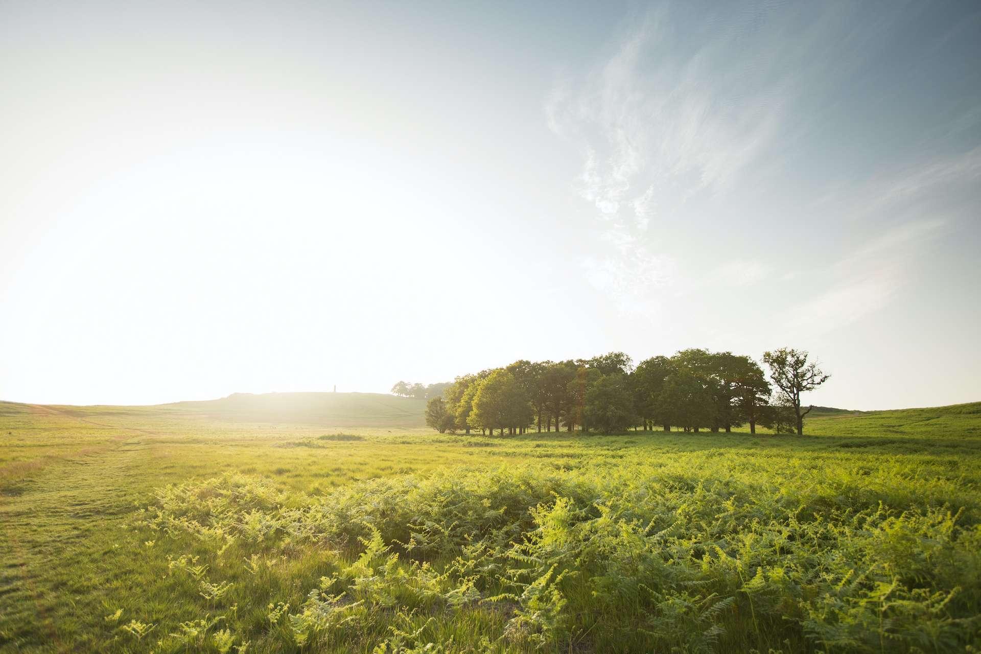 Les petits bois de moins d'un hectare ont une plus faible densité de tiques. © Risto Arnaudov, Adobe Stock