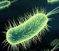 Les bactéries, un monde d'interactions. © DR