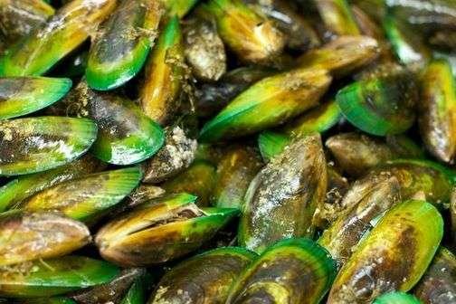 Nouvelle-Zélande : un demi-million de moules retrouvées « cuites » sur une plage !