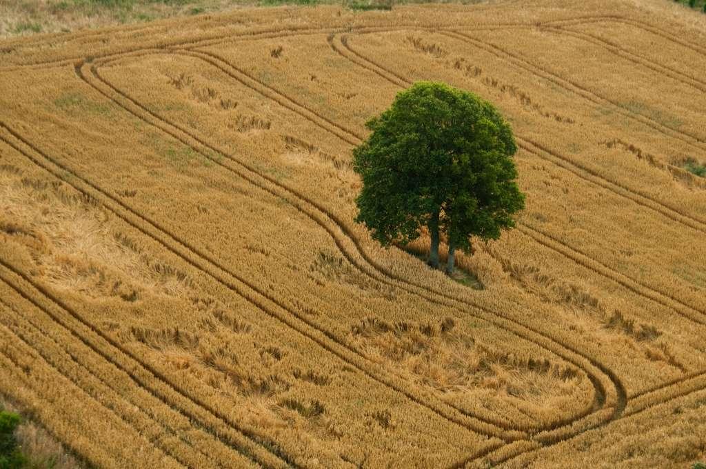 La France métropolitaine abrite 136 espèces d'arbres (chiffre du ministère de l'Agriculture, de l'Agroalimentaire et de la Forêt). © Steve Grosbois, Flickr, cc by nc sa 2.0