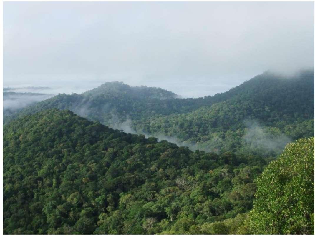 La forêt amazonienne s'étale sur 6 millions de kilomètres carrés et sa végétation joue un rôle important dans le cycle du dioxyde de carbone à l'échelle planétaire. © Sophie Fauset