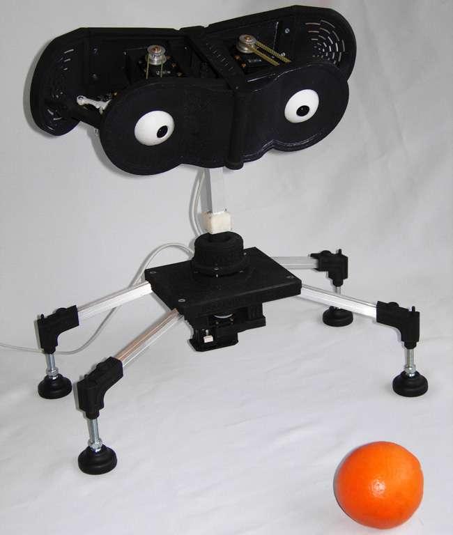 Birobot fasciné par une orange. © BVS