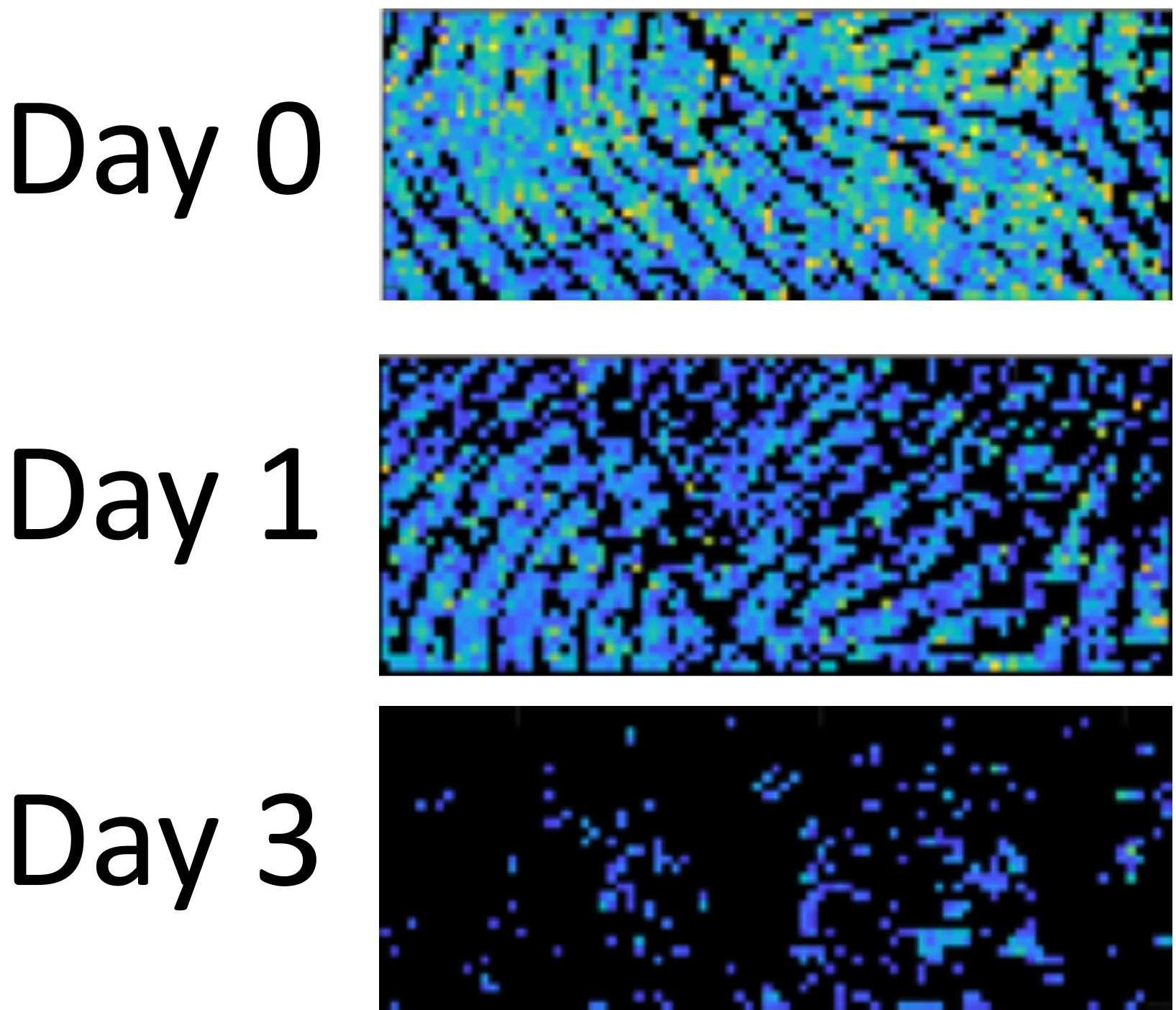 La quantité de triglycérides d'une empreinte digitale suit une dégradation proportionnelle au temps. © Analytical Chemistry 2020