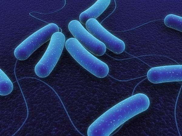 Une image de synthèse d'Escherichia coli. Credit: iStockphoto/Sebastian Kaulitzki