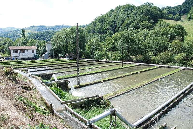 Bassins piscicoles d'une pisciculture d'eau douce. © Harrieta171, Wikimedia CC by-sa 3.0