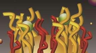 Représentation schématique des nanopoils piégeant des cations métalliques ou organométalliques, comme le méthylmercure. Ce procédé pourrait fournir une mesure instantanée de la pollution d'un échantillon par des métaux lourds, en lieu et place d'une longue et coûteuse analyse au laboratoire. © EPFL