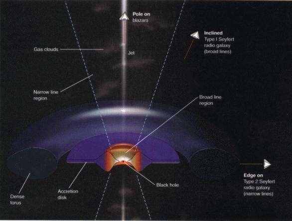 La structure d'un quasar avec le disque d'accrétion (disk) entouré d'un tore (torus). Crédit : Prof. H. E. (Gene) Smith