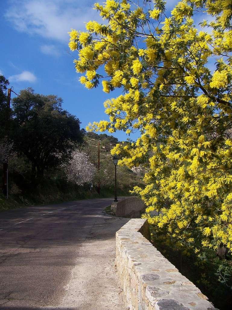 Les routes fleuries sont plaisantes à l'œil, précieuses pour les abeilles, utiles à l'agriculture, environnementalement correctes et leur coût n'est pas excessif. © Solea20 / Flickr - Licence Creative Common (by-nc-sa 2.0)
