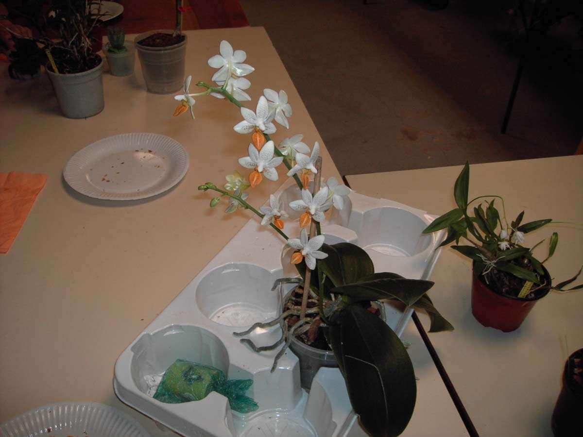 Rempoter une plante est une opération simple qui permet à vos plantes en pot de se développer. © Aaoe, Aaoe, CC BY-NC-SA 2.0