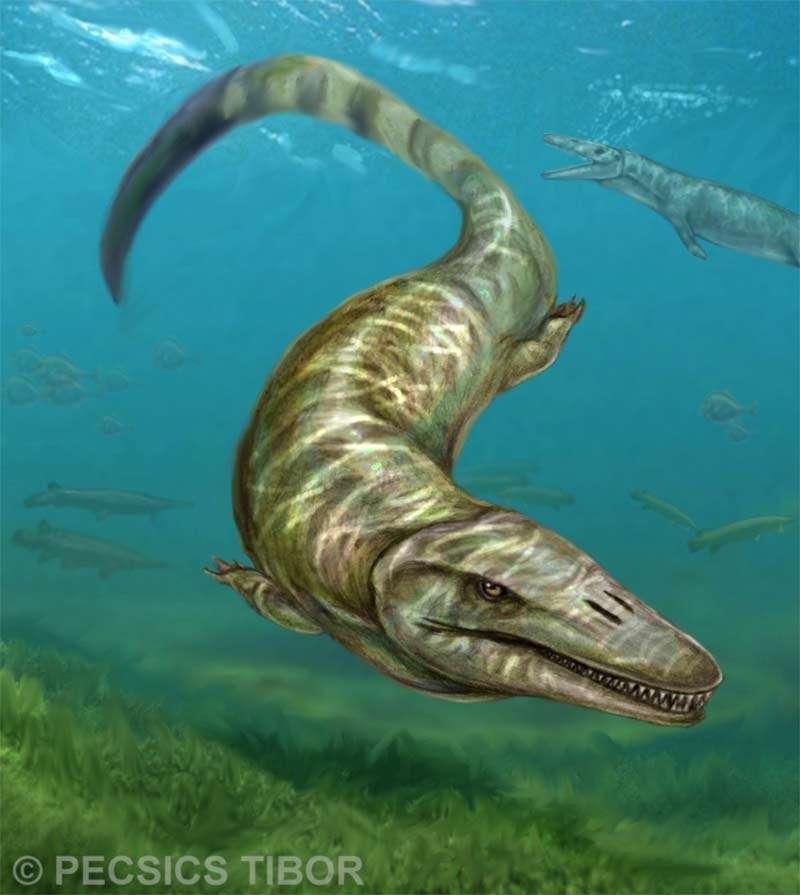 Représentation artistique de Pannoniasaurus inexpectatus, le premier mosasauridé d'eau douce découvert. Le plus petit individu trouvé mesurait 70 cm de long, contre 6 m pour le plus grand (dimensions déterminées sur la base de l'analyse de vertèbres). © Pecsics Tibor