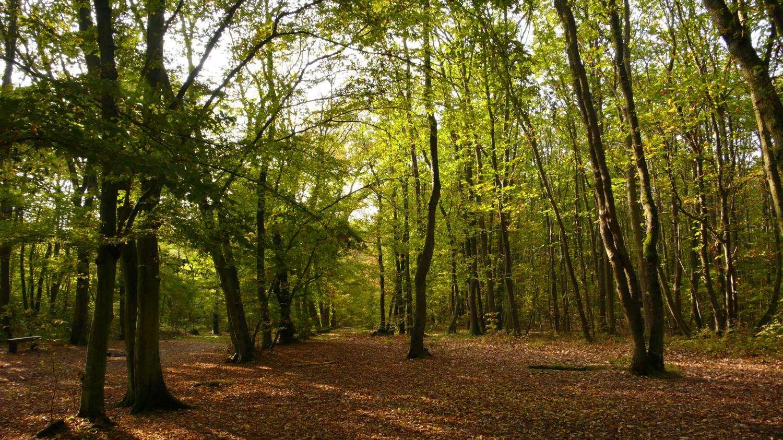 Des balades en forêt : une idée simple... Crédit Futura-Sciences/JLG