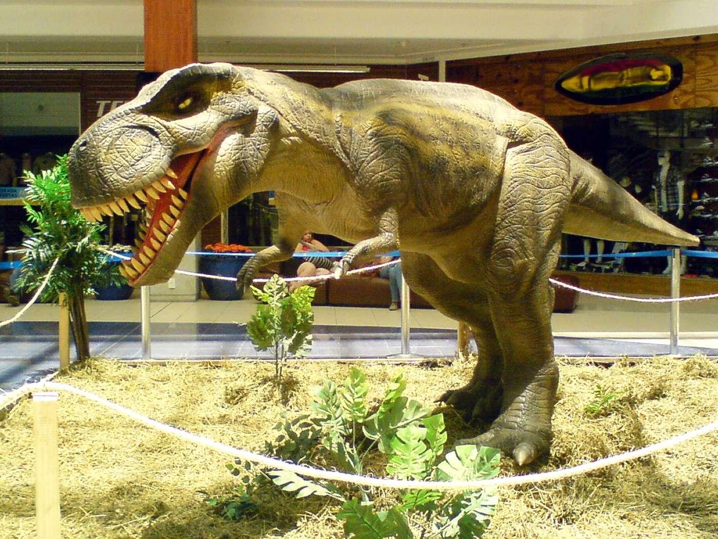 Le tyrannosaure (ici une maquette) était à l'occasion cannibale, comme l'ont montré des traces de morsures sur les os de l'un de ses semblables. L'observation vient en confirmer une autre et le tyrannosaure ne semblait pas être le seul dinosaure dans ce cas. © Rachmaninoff, licence CC BY-SA 3.0