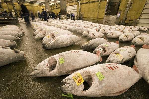 Un marché au thon rouge, une viande riche et très appréciée des humains... © WWF