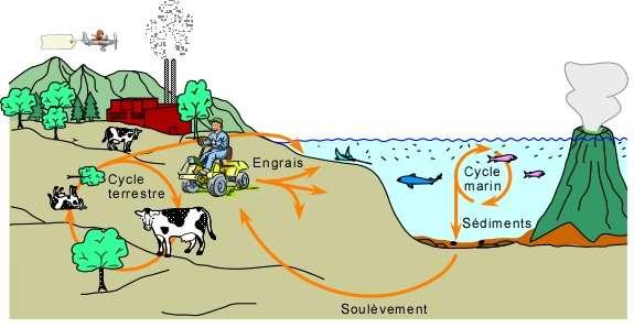 Le phosphate pourrait devenir une denrée rare dans les prochaines décennies. © Université Laval