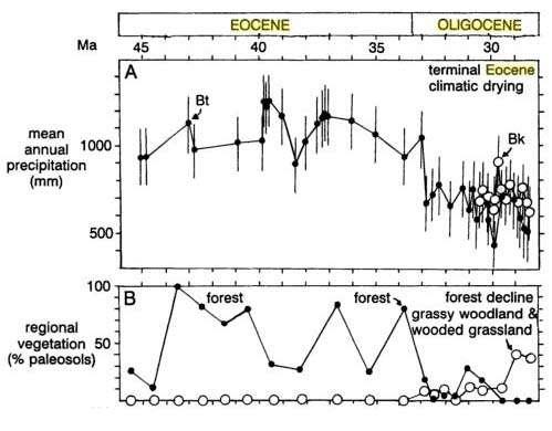 Courbes de transition des précipitations et de la végétation durant la transition Eocène/Oligocène, tracées sur la base de sédiments recueillis sur le continent nord-américain. Source : The Geological Society of USA