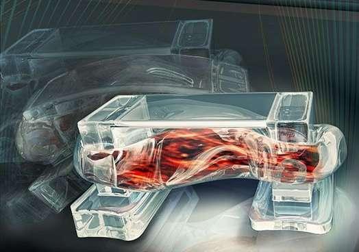 Une représentation artistique du biobot mis au point par des chercheurs de l'université de l'Illinois. Il est fabriqué à partir d'un squelette d'hydrogel imprimé en 3D auquel sont intégrées des cellules de muscle squelettique. Commandées par des impulsions électriques, elles font marcher ce minuscule robot. © Janet Sinn-Hanlon, design Group@VetMed