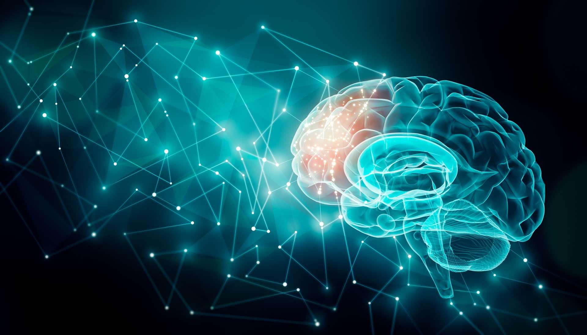 La plasticité cérébrale demeure un mystère non résolu, mais un pas de plus vient d'être fait vers sa compréhension. © Matthieu, Adobe Stock