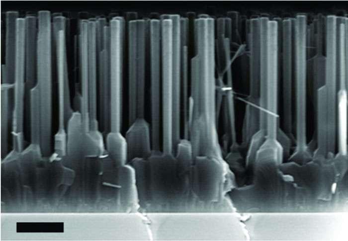 Une image prise avec un microscope électronique à balayage montrant le film d'oxyde de zinc mince et ses nanofils. La barre d'échelle en bas à gauche indique une longueur de 1 micron. © Nature Nanotechnology/Jianlin Liu