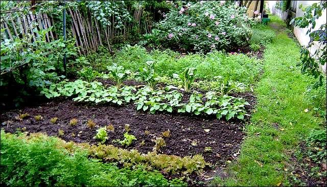 La santé du jardin et les algues, un concept auquel penser. Crédit : Michel Caron