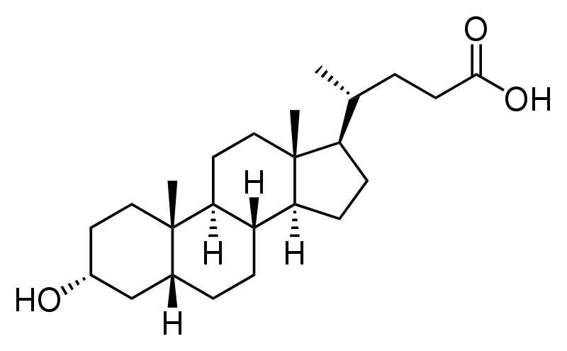 Après son action, l'acide lithocholique réintègre parfois la circulation sanguine et parvient jusqu'au foie où il sera de nouveau métabolisé. Autrement, il est excrété avec les selles. © Calvero, Wikipédia, DP