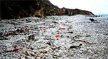 Pollution du rivage par les matières plastiquesCrédits : http://www.aquacaux.asso.fr