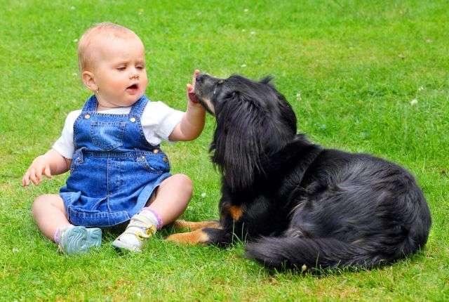 Le chien est le meilleur ami de l'Homme, mais aussi du bébé. Les animaux de compagnie ont prouvé leur intérêt en montrant qu'ils favorisaient globalement le bien-être. © Kletr/shutterstock.com