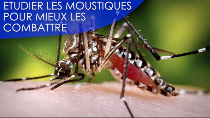 Interview : la lutte contre les moustiques est-elle sans fin ?