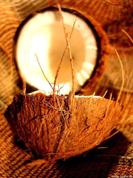 La noix de coco est très riche en calories. © Wikimedia Commons