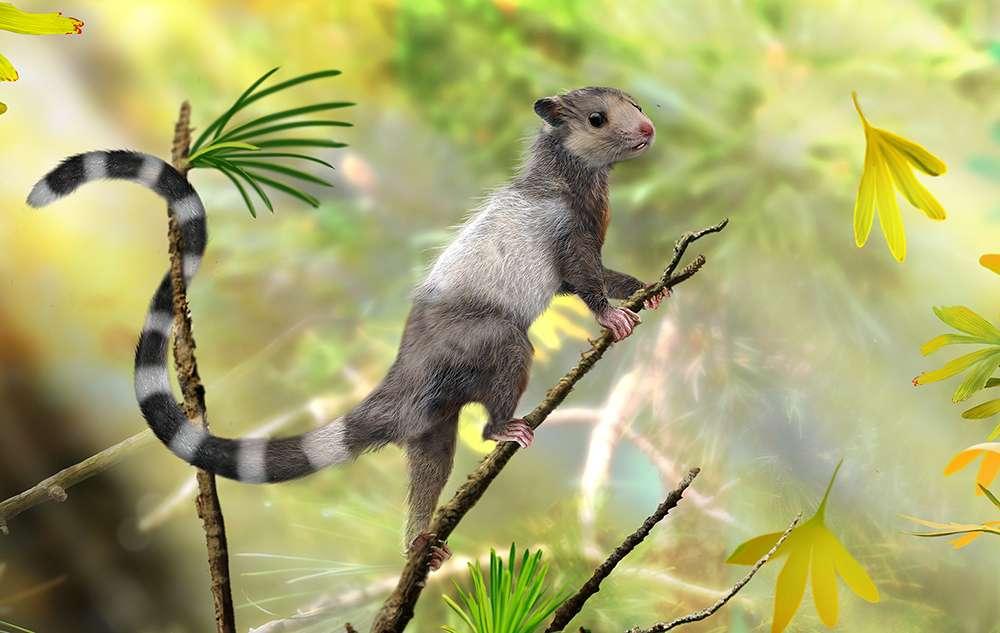 Une reconstruction d'une des nouvelles espèces de mammifères dont les restes fossilisés datant du Jurassique ont été découverts récemment. Xianshou songae était un animal de la taille d'une souris. Arboricole, il appartenait à un groupe éteint de mammifères du Mésozoïque appelé Euharamiyida. © Zhao Chuang