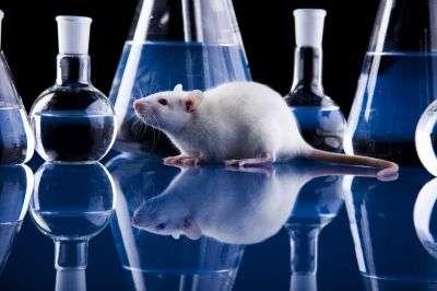 D'ici 2013, l'UE devrait interdire la vente de tout produit cosmétique testé sur des animaux. © Sebastian Duda/shutterstock.com