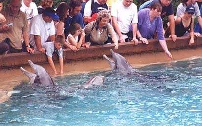 © Caroline LepageQuel avenir pour ces dauphins en captivité livrés à la foule, et leur groupe d'origine resté en mer ?