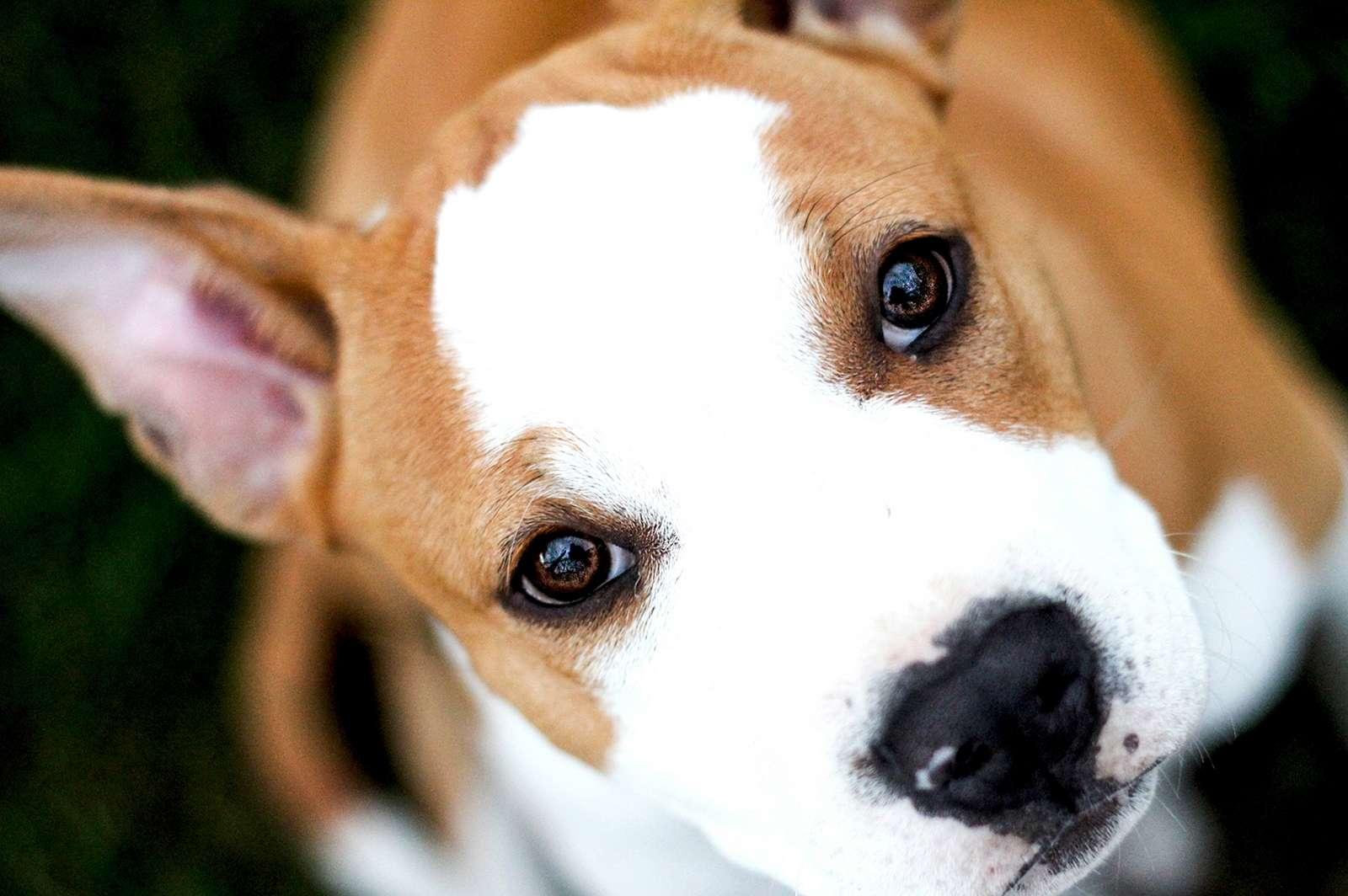 Consultation en comportement canin - Boules de poils