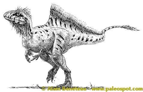 Proposition de reconstitution d'un Concavenator, dont une seule espèce est connue : Concavenator corcovatus. © Alain Bénéteau