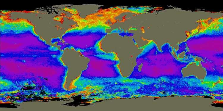 La répartition de la chlorophylle dans les océans est un indicateur de zones de floraison du phytoplancton. Présents uniquement dans la couche de surface des océans, puisque nécessitant la lumière solaire pour la photosynthèse, ces micro-organismes sont majoritairement répartis dans les zones d'upwelling des océans. © Nasa