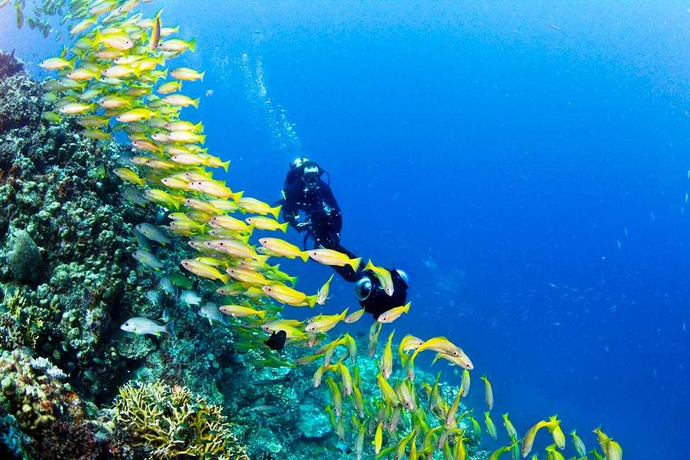 Poumons des océans, les récifs coralliens sont vulnérables et subissent les conséquences de l'activité humaine. Pour aider les chercheurs à les étudier et à les protéger, les membres du Catlin Seaview Survey constituent une extraordinaire banque d'images et de données. Elle prend notamment la forme d'un Google Street View des océans. Ici, Christophe Bailhache, le directeur des opérations du Catlin Seaview Survey, en plein travail sur la Grande Barrière de corail, en Australie, en 2012. © Catlin Seaview Survey, Jayne Jenkins
