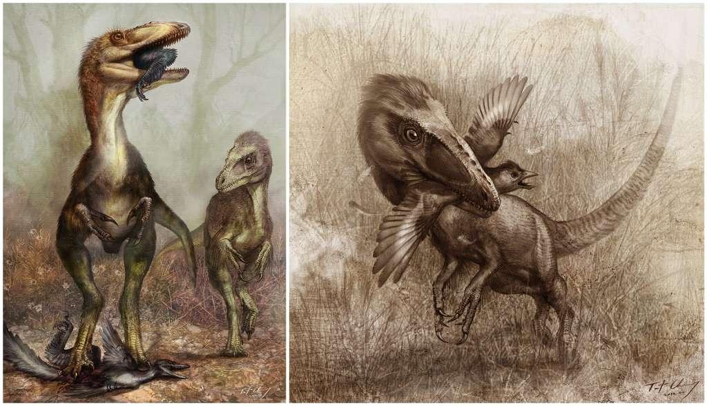 Sinocalliopteryx gigas aurait pratiqué la chasse à l'affût, lui permettant de capturer des Confuciusornis, un dinosaure présentant une morphologie proche de celle des oiseaux actuels (à gauche), et des Sinornithosaurus (à droite). Illustration de Cheung Chungtat. © Xing et al. 2012, Plos One