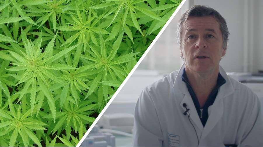 Interview : le cannabis, une substance anticancérigène ?