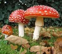 Tout savoir sur les champignons ! © DR