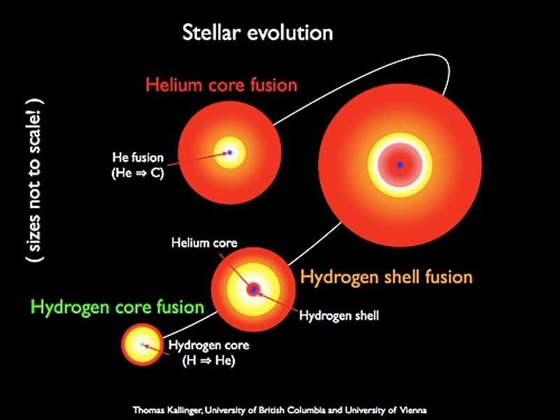 Schéma illustrant l'évolution d'une étoile deux fois plus massive que le Soleil. Elle brûle d'abord de l'hydrogène en hélium dans son cœur, puis l'hydrogène autour de son cœur en hélium au moment où elle devient une géante rouge, et enfin l'hélium de son cœur. © Tomas Kallinger