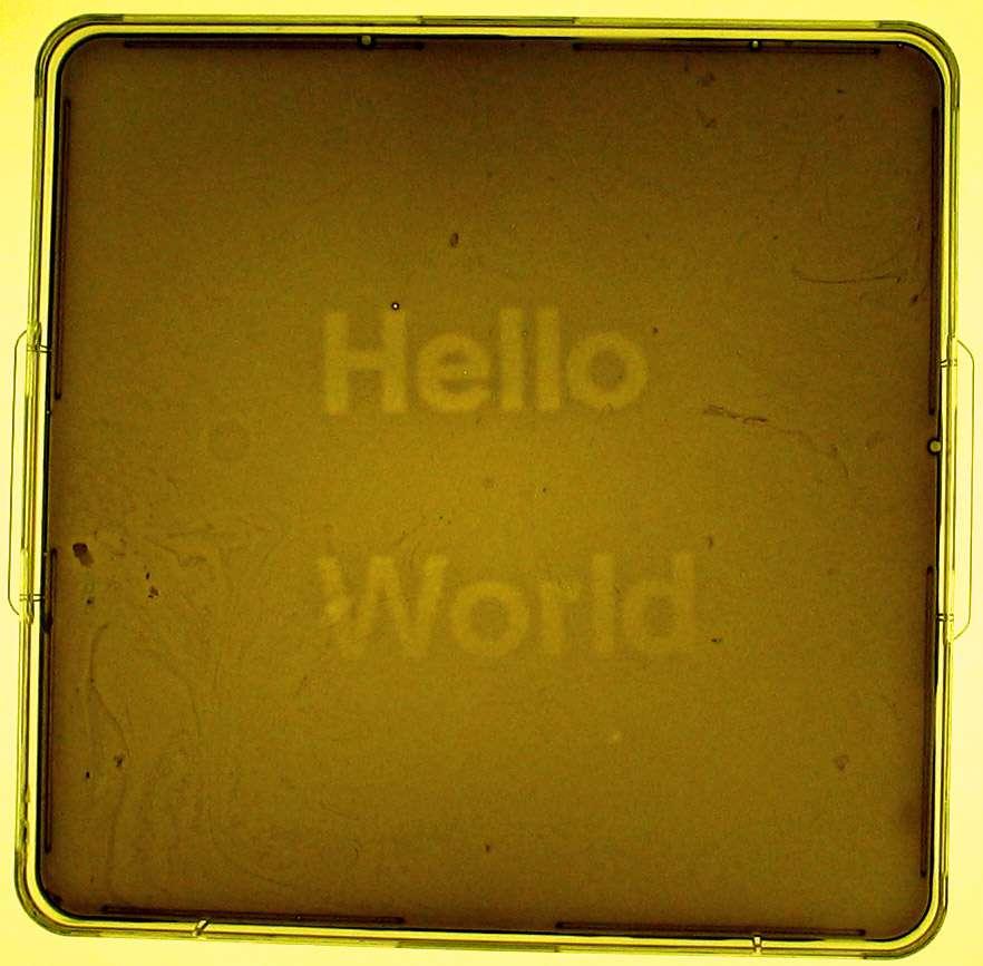 Ce biofilm bactérien programmable par la lumière est l'œuvre de scientifiques ayant participé en 2004 à l'iGEM, une compétition internationale de machines vivantes génétiquement modifiées organisées par le célèbre MIT. Ce genre de concours stimule la créativité et favorise le développement de la biologie synthétique qui inspire tant le mouvement DIYbio. © Endy, Wikipédia, cc by 2.5