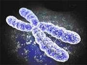 L'aneuploïdie est une anomalie du nombre de chromosome. © DR