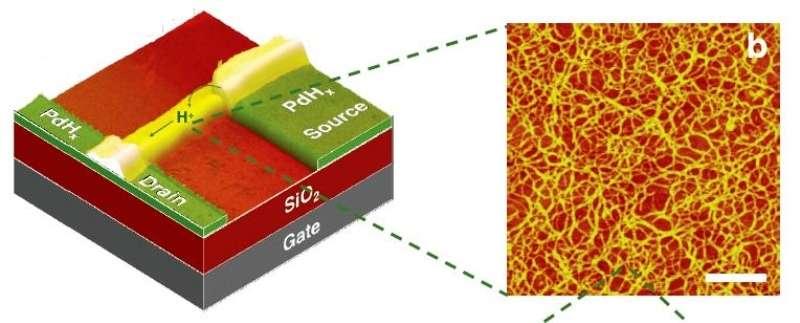 Un schéma montrant le transistor à proton (H+) avec à droite une image en fausses couleurs des fibres du matériau analogue au chitosane. © University of Washington