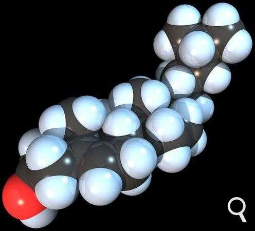 Le cholestérol est un lipide essentiel pour l'organisme. Cependant, certaines molécules issues du cholestérol sont néfastes pour la santé. Le 27-hydroxycholestérol par exemple stimule la croissance des cellules tumorales dans le sein. Il est donc important de limiter l'apport de cholestérol dans son alimentation. © RedAndr, Wikimedia Commons, GNU 1.2